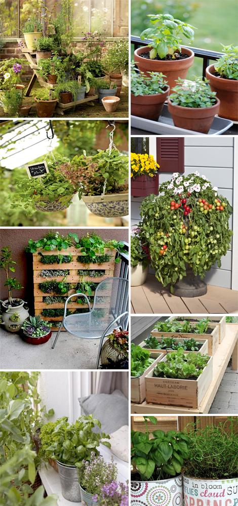 Orto in citt ortaggi e erbe aromatiche bio for Decorazioni con verdure e ortaggi